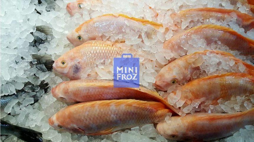 Ikan Beku tidak bergizi? Ini faktanya!